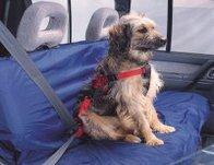 Ezy Dog Car Seat Belt Harness