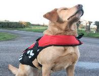 Ezy Dog Seadog Floatation Life Vest